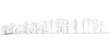 Screenshot-Schnitt-Punktwolke-Wald-Baum-Baeume-DGM-Digitales-Gelaendemodell-Wald-Waldboden-Daten-UAV-LiDAR-Befliegung-Begehung-von-einem-Waldgebiet-Bestimmung-von-Biomasse-Kohlenstoffgehalt