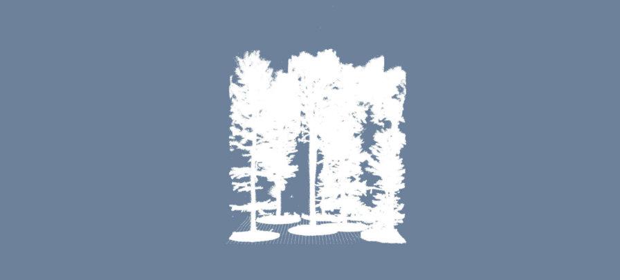 Screenshot-Punktwolke-Baum-Stammvolumen-Zylinder-Stamm-DGM-Digitales-Gelaendemodell-Wald-Waldboden-Daten-UAV-LiDAR-Befliegung-Begehung-von-einem-Waldgebiet-Bestimmung-von-Biomasse-Kohlenstoffgehalt